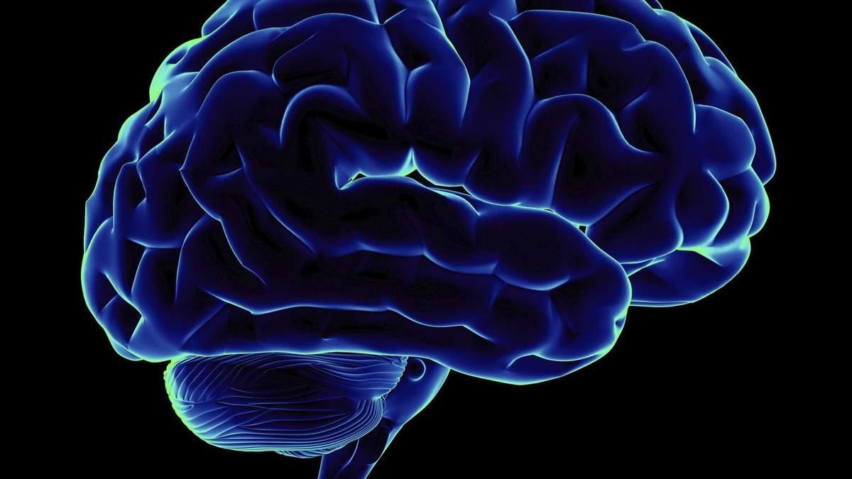 До якого віку мозок продукує нейрони: вчені