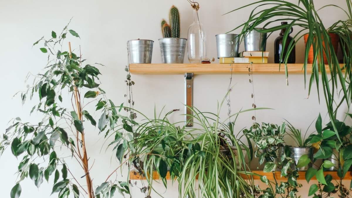 Алергія на рослини – симптоми, ліки при риніті