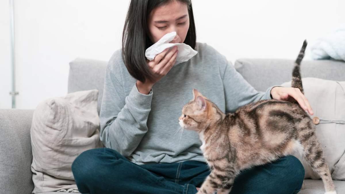 Аллергия на домашних животных – причины, симптомы – что делать