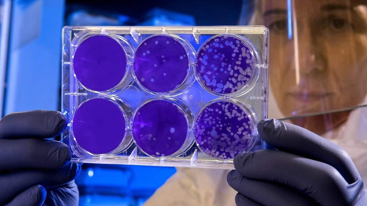 Иммунные клетки вырастили в пробирке