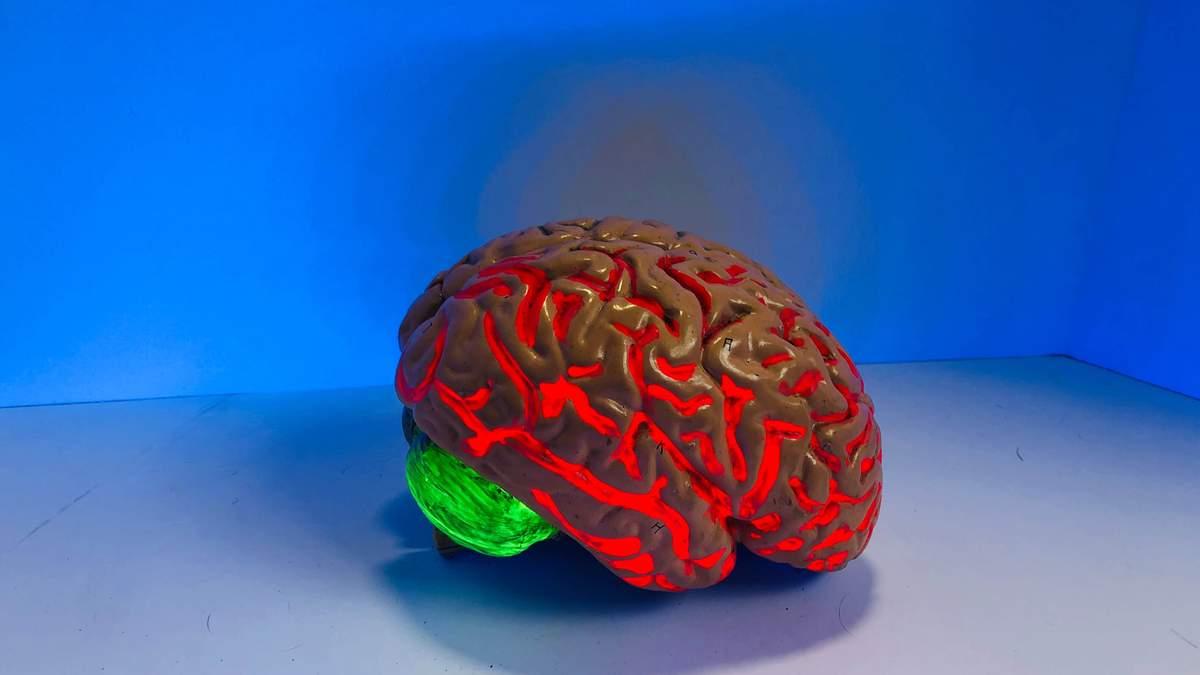 Омолодить мозг