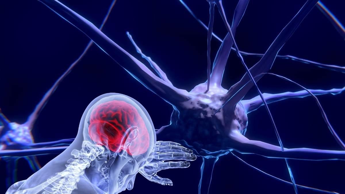 Роль нервной системы в иммунных процессах