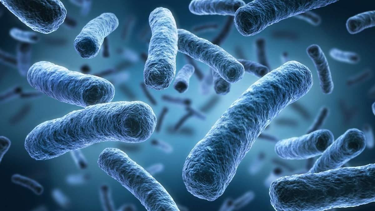 Мікрофлора кишківника може розповісти про тривалість життя