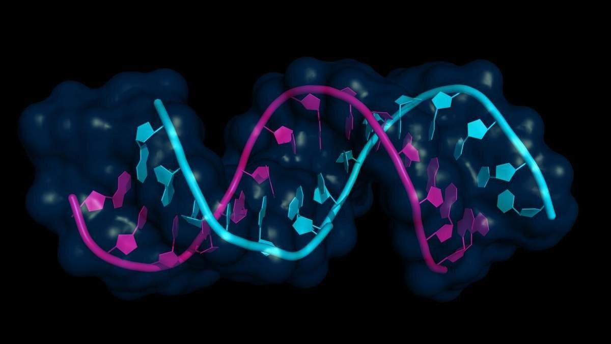 Регуляция генов