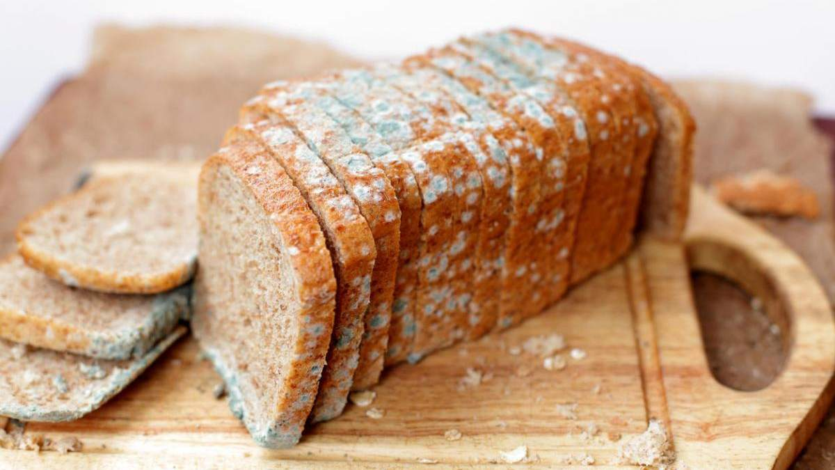 Чи можна їсти хліб з пліснявою