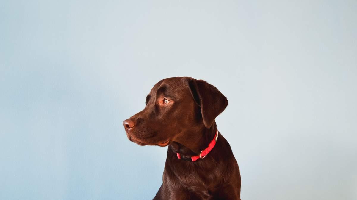 В собаки виявили коронавірус