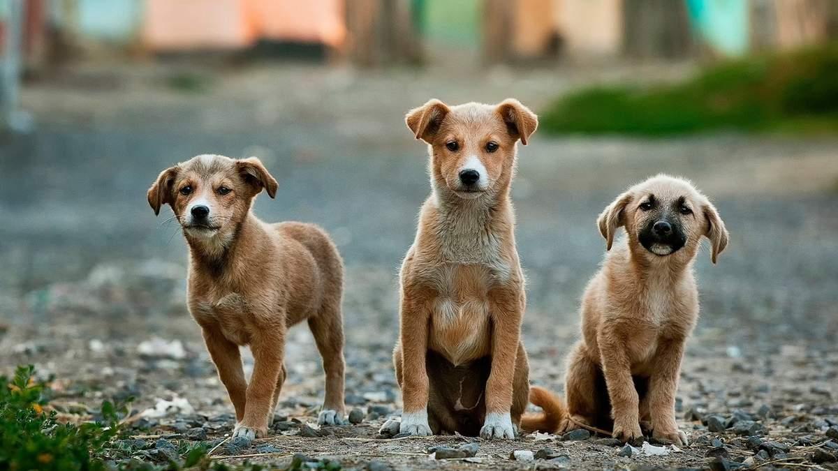 Домашні тварини не переносять коронавірус