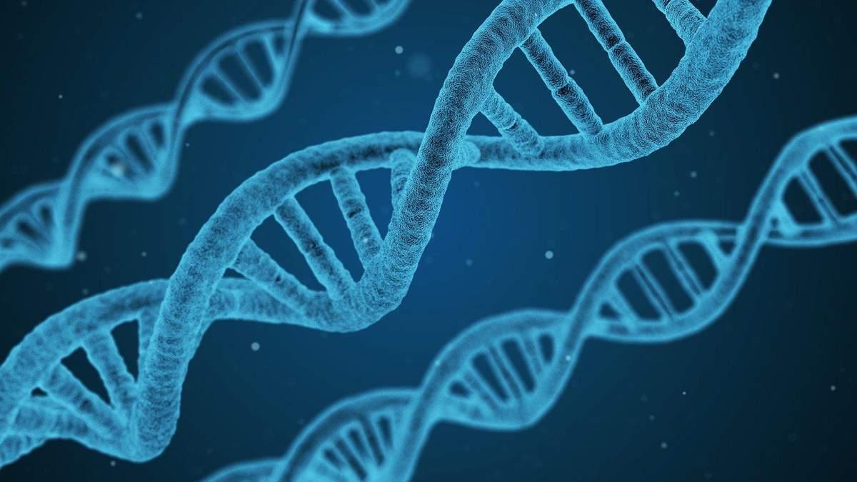 Женщины живут дольше из-за хромосом