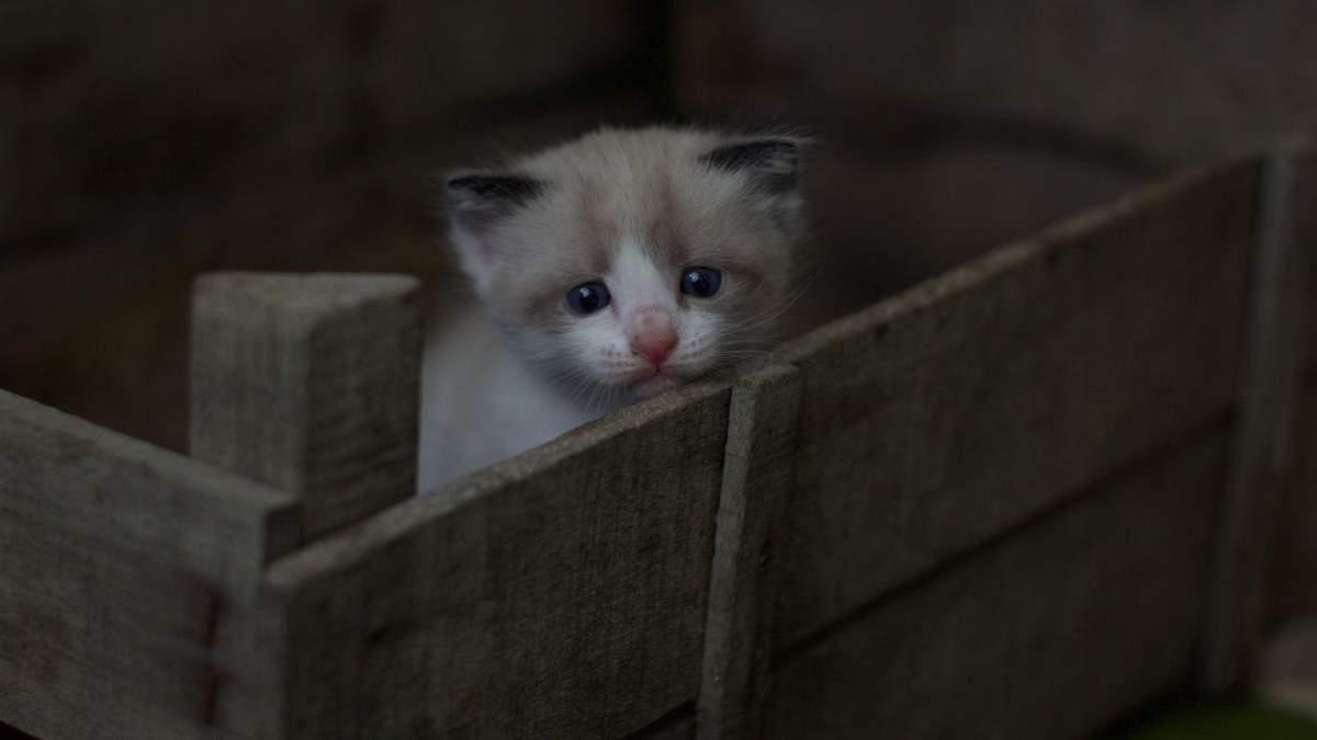 В Ухані коронавірус COVID-19 виявили у безпритульних котів