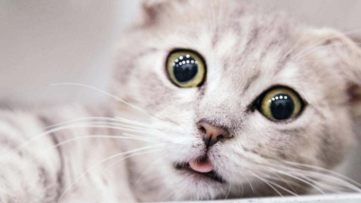 Коронавірус виявили у котів
