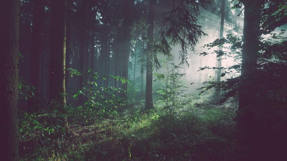 Вырубка лесов убьет людей
