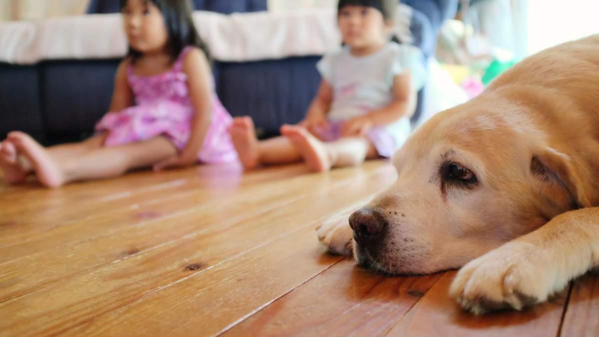 В Японії вперше виявили коронавірус у двох собак
