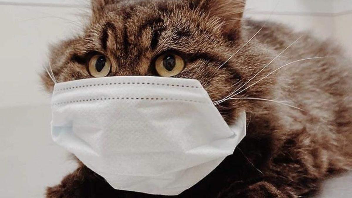 Які тварини вразливі до коронавірусу: інфографіка