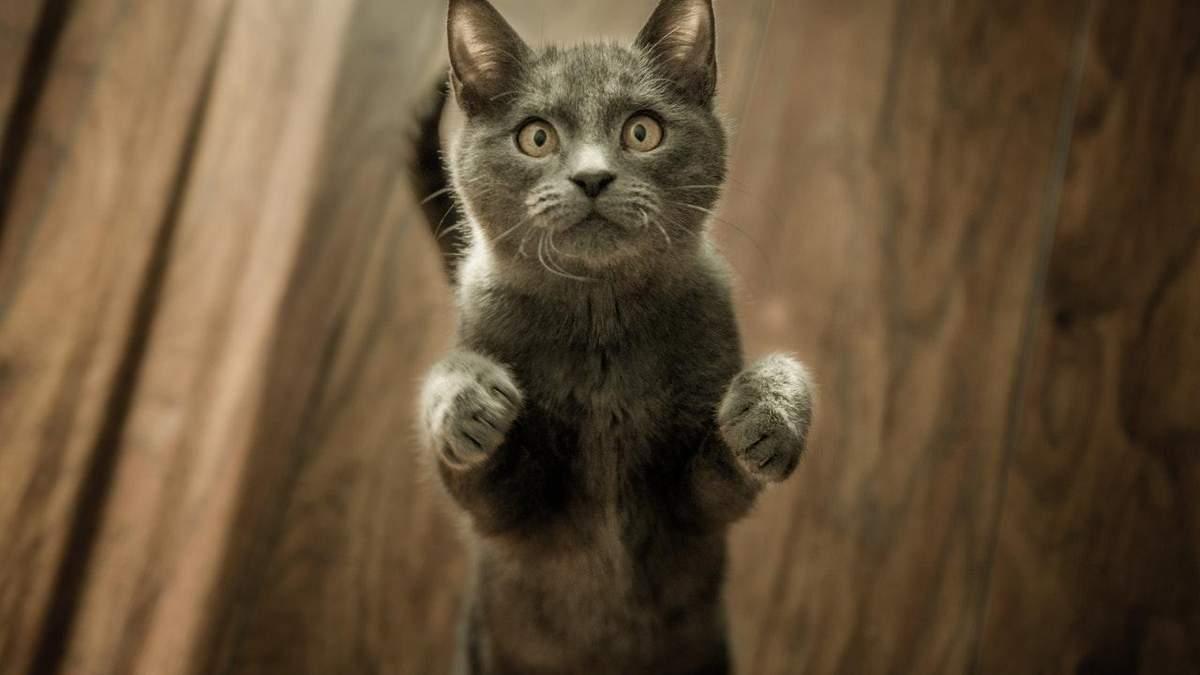 Як ліки для котів можуть допомогти у лікуванні коронавірусу