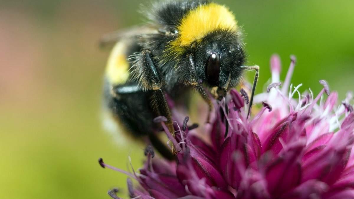 Пчелиный яд против рака
