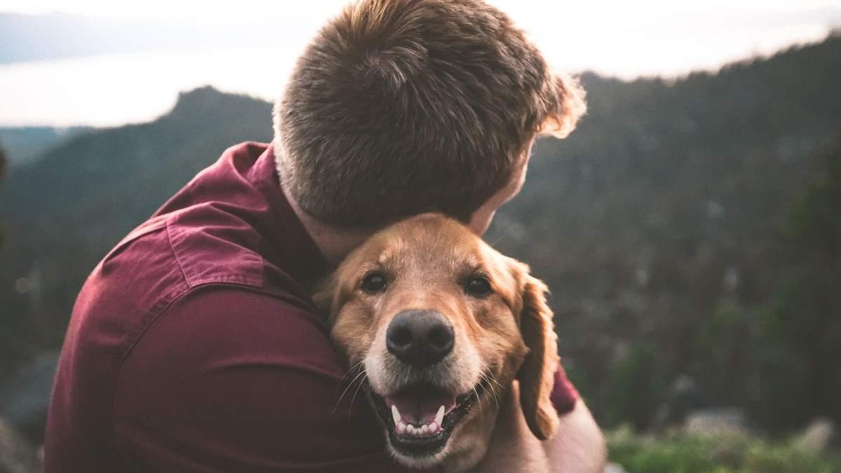 Тварини можуть покращувати імунітет людей