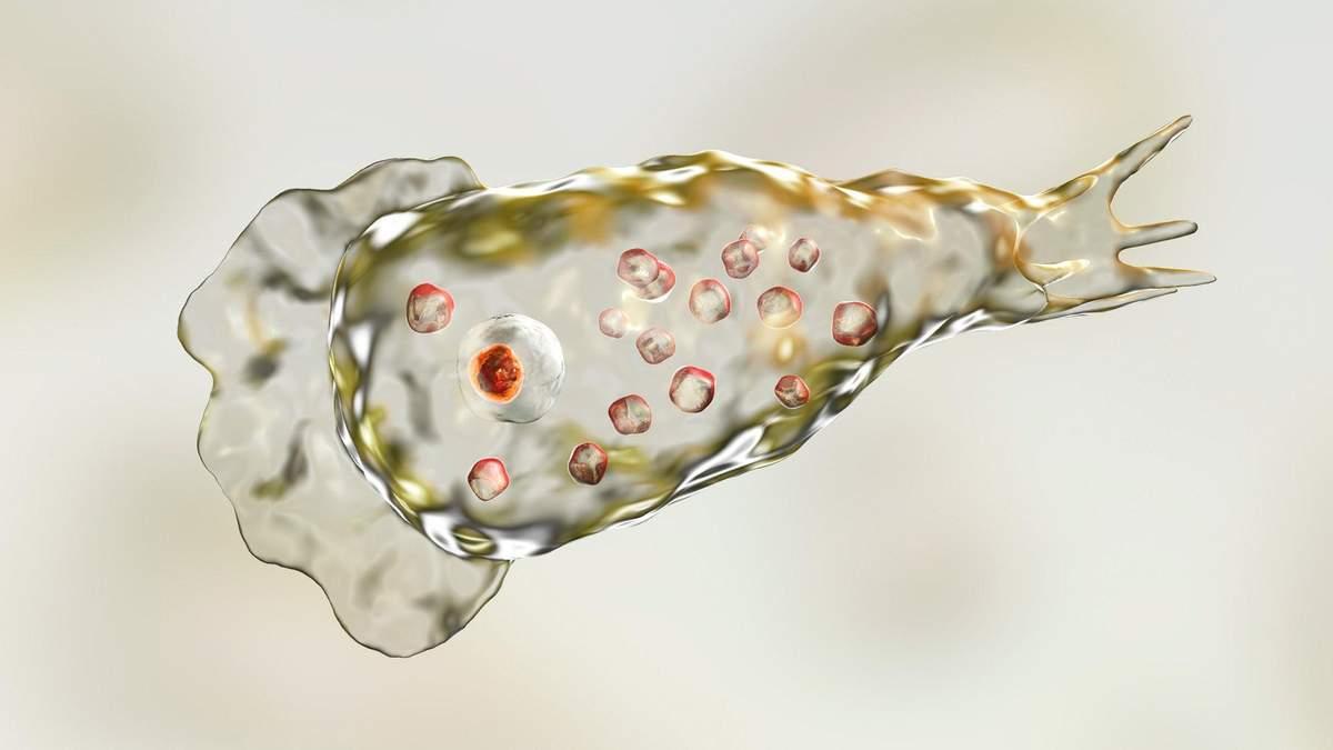 Микроб, пожирающий мозг