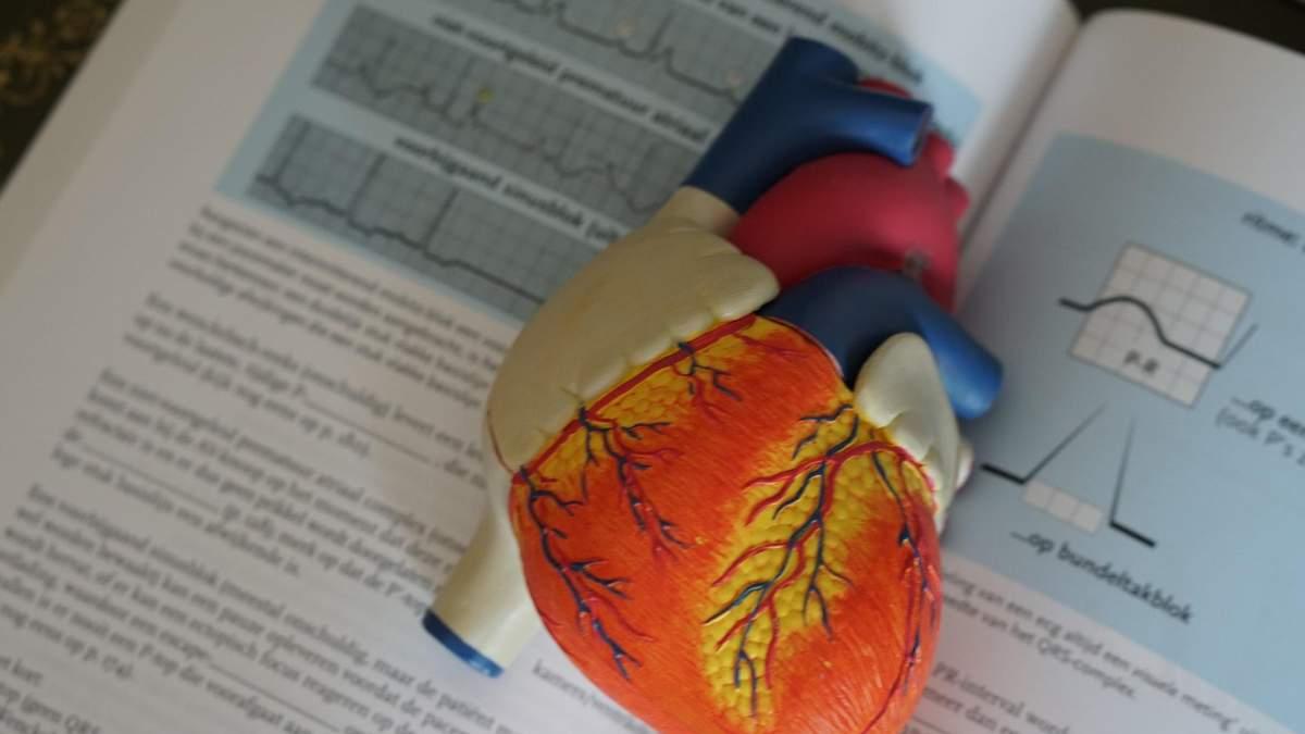 Чому в жінок здоровіше серце