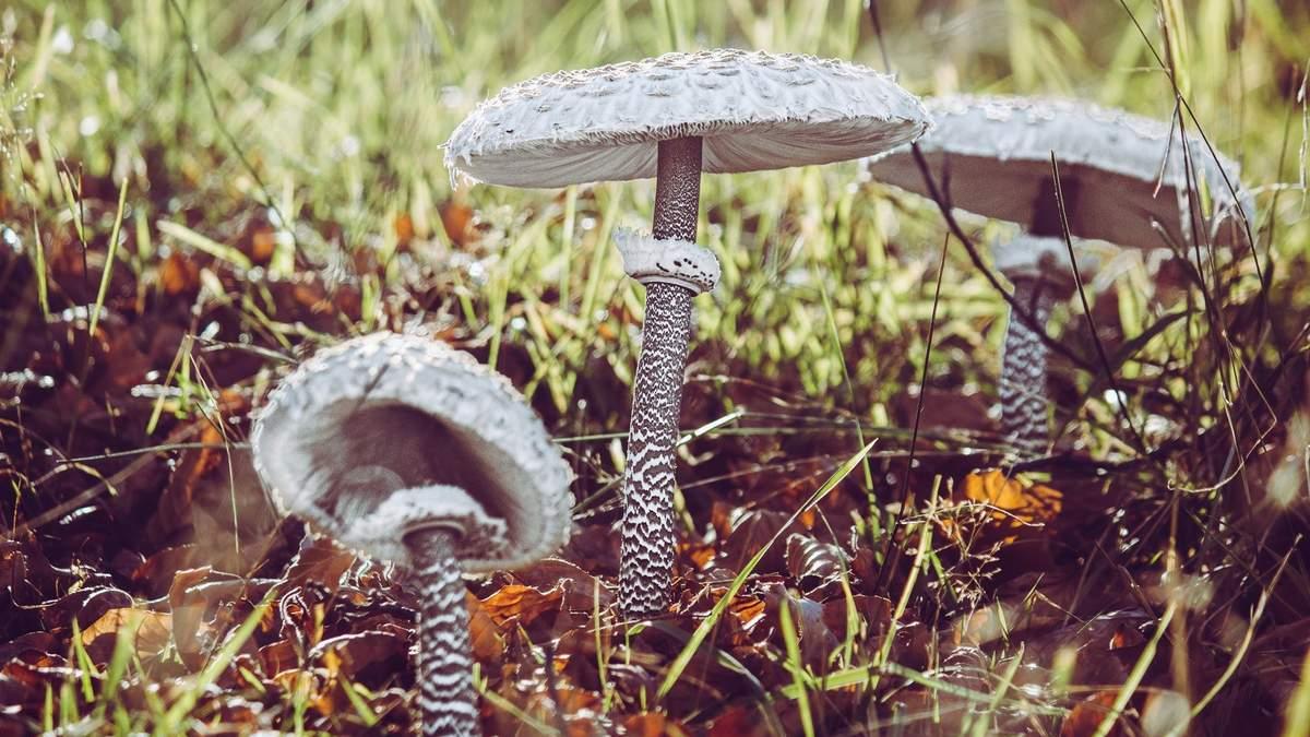 Галлюциногенные грибы в 4 раза эффективнее антидепрессантов