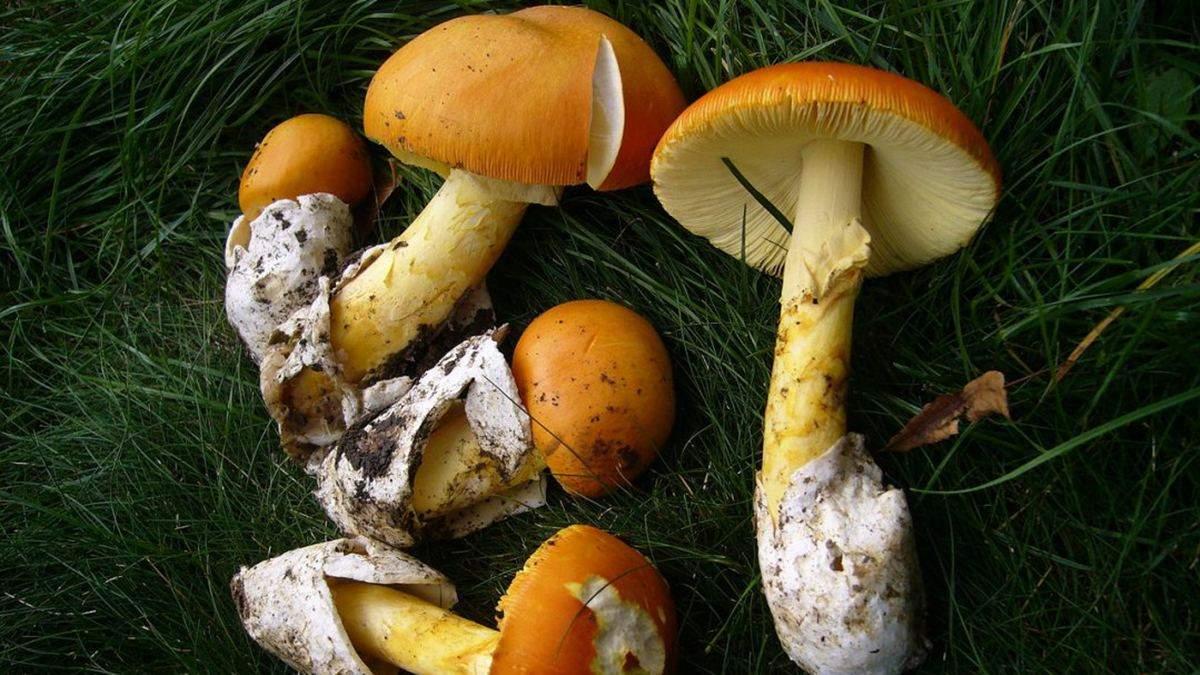 В Днепре 9-летний мальчик умер после отравления грибами