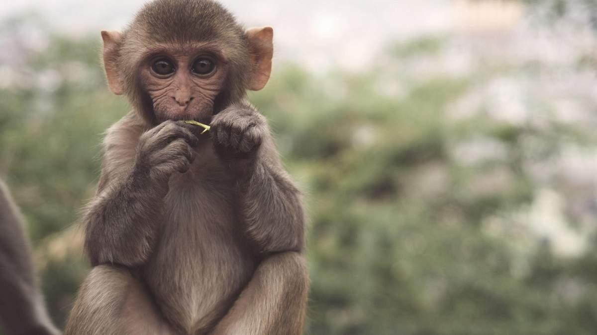 Імунітет проти ВІЛ та Еболи: у мавп знайшли ген, який зупиняє віруси - Здоров'я 24