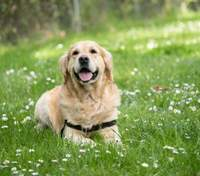Мужчина потратил 300 фунтов на лечение пса, а оказалось, что тот просто сочувствовал хозяину