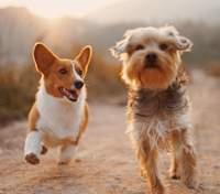 Собаки захищають своїх господарів від деменції