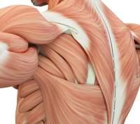 Створили штучні м'язи, які можна прокачати