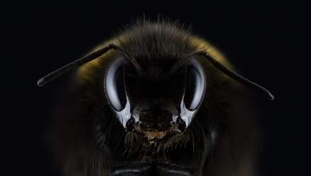 Що робити при укусі бджоли