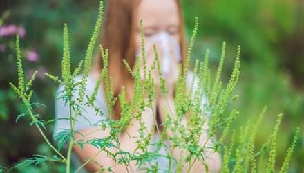 Алергія на амброзію: симптоми та лікування
