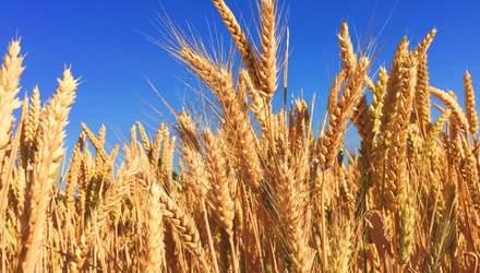 Як ГМО впливає на здоров'я людей