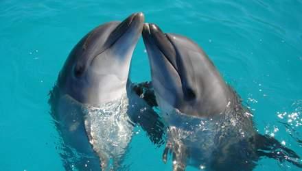 Чому не варто ходити в дельфінарії та вестись на ефективність терапій із ссавцями