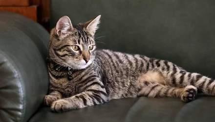 У мерії Львова житиме кіт Левчик, який матиме інстаграм-сторінку: миле відео