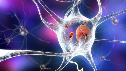 Обнаружили функцию загадочного белка, который убивает клетки мозга