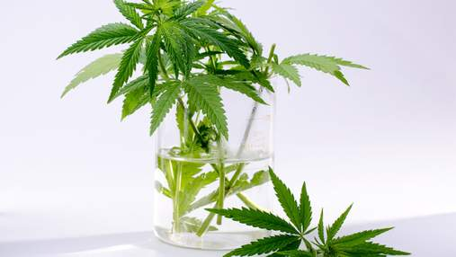 Какие страны легализовали марихуану: инфографика