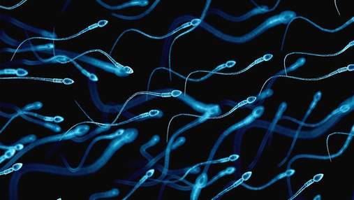 Як зайва вага у чоловіків впливає на активність сперматозоїдів
