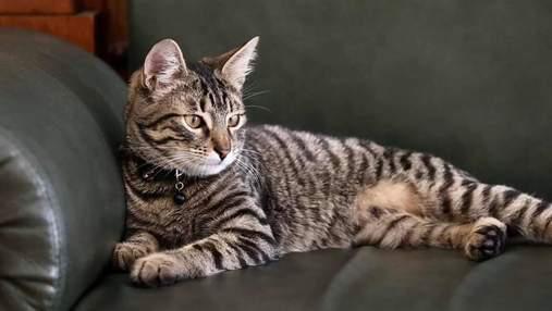 В мэрии Львова будет жить кот Левчик, у которого будет инстаграм-страница: милое видео