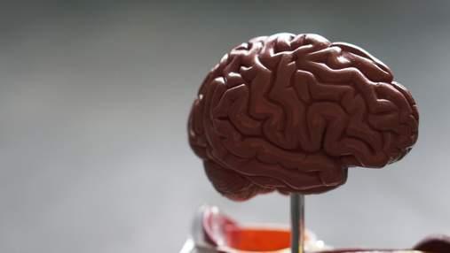В якому віці мозок досягає піку своїх можливостей