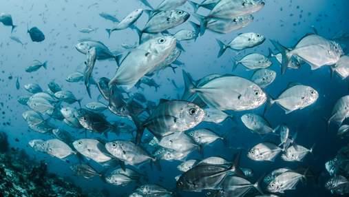 Прием антидепрессантов людьми вредит рыбам: они превращаются в зомби