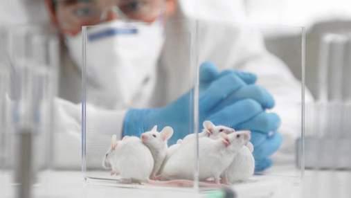 Ученые впервые не тестировали лекарства на животных, и смогли создать препарат для онкопациентов