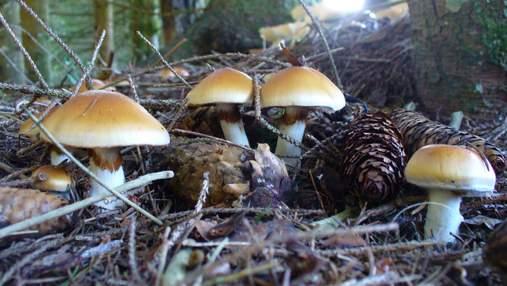 Умерли 7-месячный мальчик и 5-летняя девочка: трагическое отравление грибами на Черниговщине