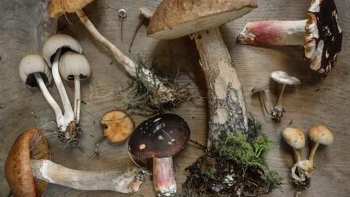 Усі отруїлися грибами: лікарі борються за життя брата та сестри загиблих на Чернігівщині дітей