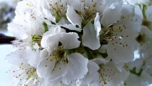 Алергія на цвіт: чому виникає та що робити