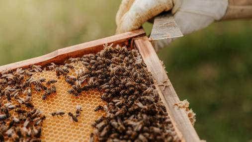 Укусы пчел, ос и шершней: что делать, как избежать и лечить