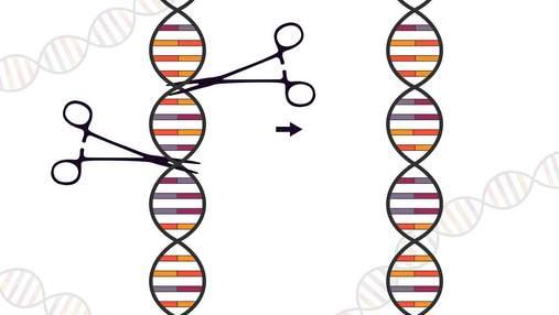 Генне редагування зупинило розмноження коронавірусу в людських клітинах