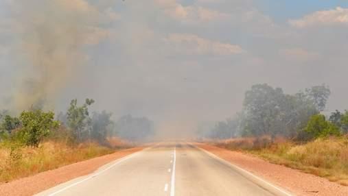 Сколько людей ежегодно умирает из-за аномальной жары