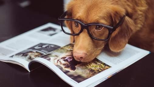 Собаки могут предсказать эпилептические припадки: как это возможно