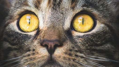 Як коти можуть викликати психоз