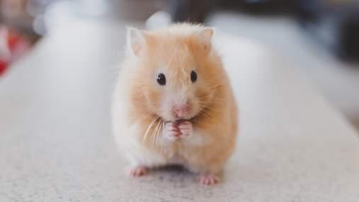 Миші сумують, коли бачать, як страждають інші миші: як це має допомогти людям