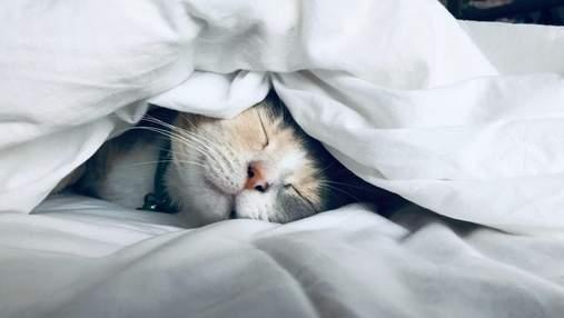 Що робити, якщо не можеш заснути